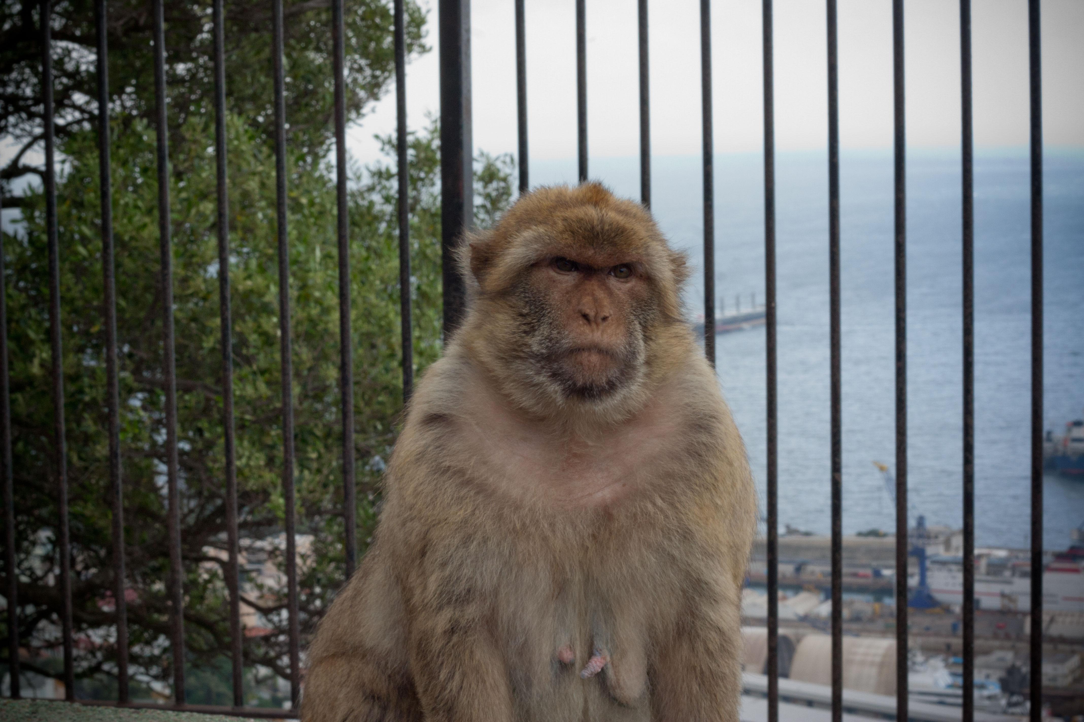 Туристически гид за Гибралтар | Блогът на Ванина Иванова